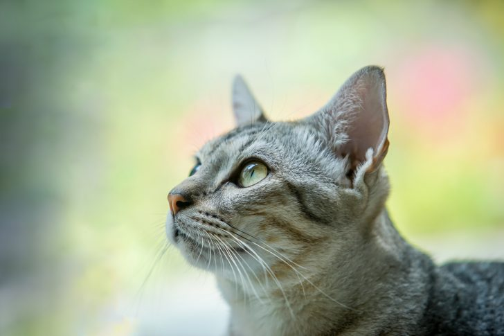 cat in the nature , select focus eye