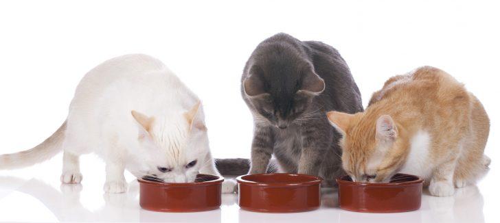 Drei Hauskatzen am Futternapf