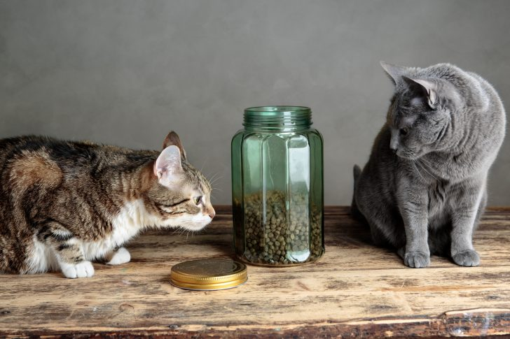 Two Cats curious about Cat Food in glass Jar