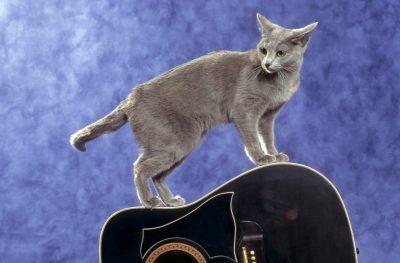 jeune chat en quilibre sur une guitare